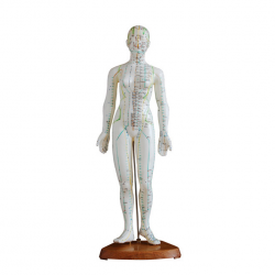 Modelo de acupuntura humana Feminino de 48cm