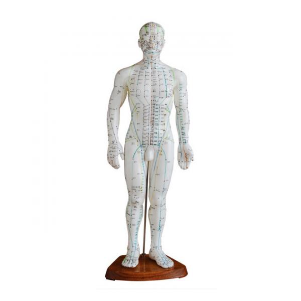 boneco acupuntura